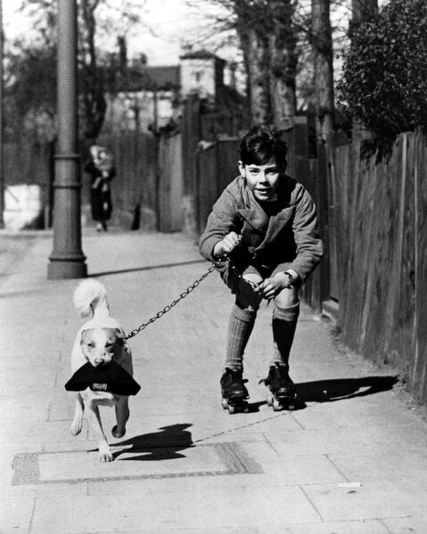 1950s Britain. Boy in shorts rollerskating on the pavement with his pet dog on a lead, who is carrying his cap in his mouth. c. 1950