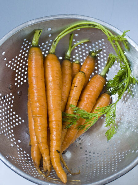 Bunch of fresh young carrots with tops, draining in old aluminium colander   credit: Marie-Louise Avery / thePictureKitchen / TopFoto