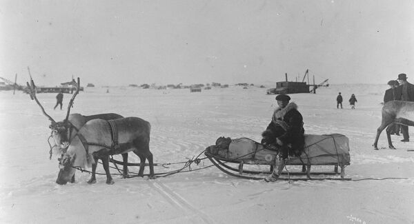 Carrying the United States mail furthest north  An interesting picture taken on the Teller Route, showing the mail sleigh, drawn by reindeer, at a remote settlement some 120 miles north of Nome, Alaska.  25 November 1925