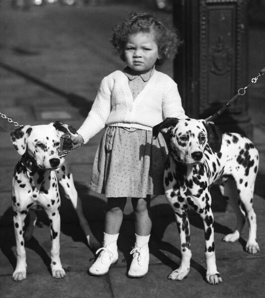 Three year old Jennifer Gulding of Cambridge makes sure these two prize Dalmation pups don't change their spots, as she holds them tight at the British Dalmation Club Championship Show at Seymour Hall. The pups are Mrs. E. Jobb's Deranor Dynah