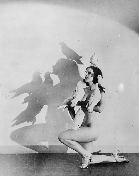 The Dove dance, America's latest role.  The fan dance, having palled on America's jaded audiences, Rosita Royce has devised a startling new act, where pigeons take the place of the usual fans or balloons.  In the dance a combination of a 'strip tease'