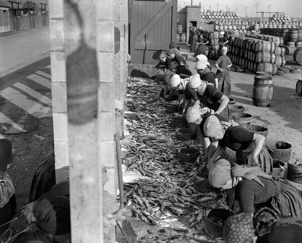 Herring Fishery at Great Yarmouth , Norfolk , England   Fisher girls gutting and cleaning the herring on the quayside .   1923