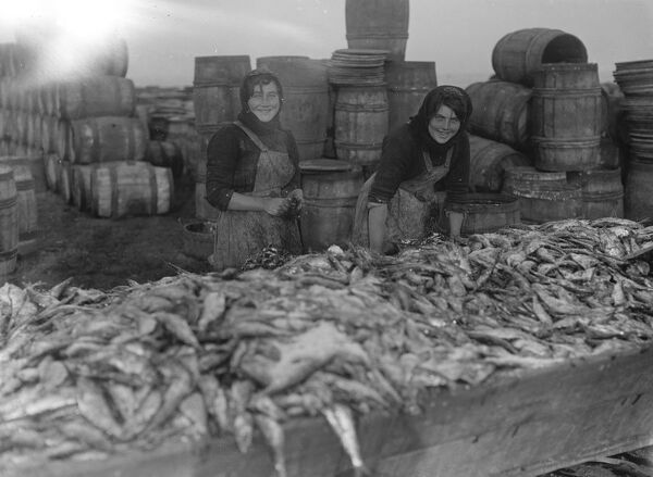 Herring harvest at Lowestoft  Scotch fisher girls gutting and packing the fish on the quay side Lowestoft .  6 November 1920 Fish where the fish are!
