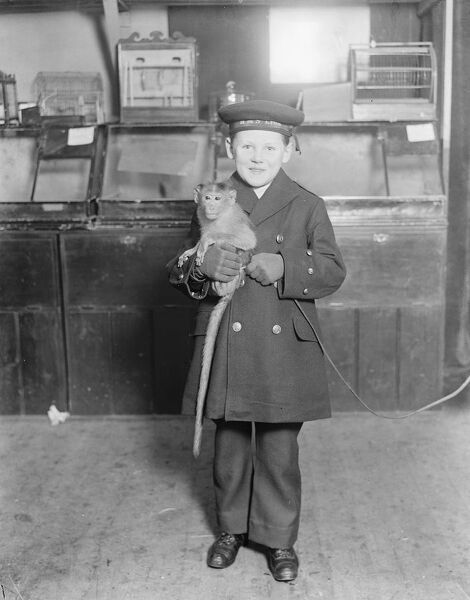 Live toys at Derry and Toms  A little sailor boy with his christmas present in advance, a bonnett monkey at 15 guineas  18 November 1919