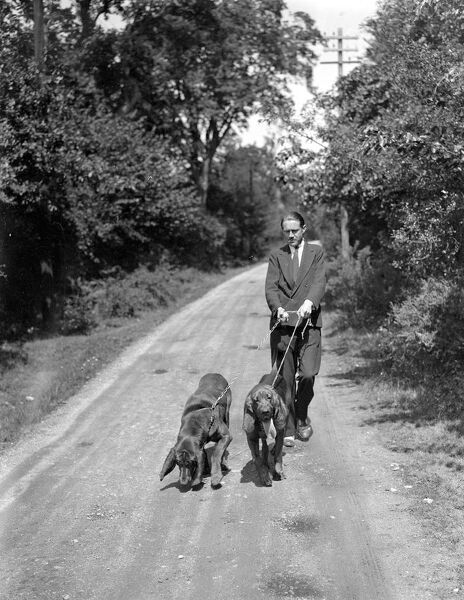 Mr J Chamberlain and his bloodhounds on the track of the masked man who made a attack on the proprietor of a garage at Hucklesbrook, Fordingbridge.   24 and 25 May 1937