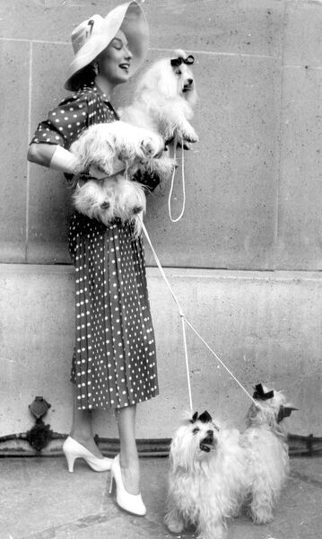 As this woman shows, the Paris dog show has become a fashion show 10th July 1954