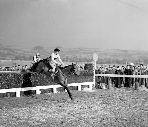 Pat Taaffe on Irish-trained Arkle takes the last fence ahead of English champion Mill House, ridden by G.W. Robinson before racing on to win the Cheltenham Gold Cup.  7 March 1964  Arkle (19 April 1957 - 31 May 1970)