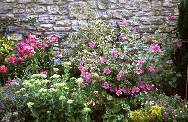 Pretty, colourful flower border against old stone wall. credit: Marie-Louise Avery