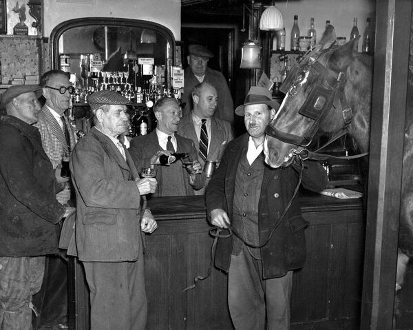 Watched by customers and the landlord Mr H Mills pouring out beer Ginger a 9 year old cart horse stops for a quick pint with his master at the public bar of the New Inn Monkton Kent 26 October 1951