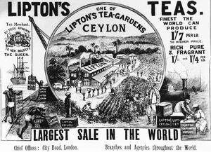 Advertisement for Lipton Tea 1896