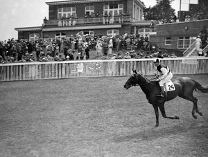 ' Alor Star ' at Goodwood Racecourse, Sussex, England. 1937