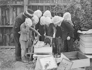 A beekeeping class is an innovation at Wood Lane, Shepherd's Bush, London open-air