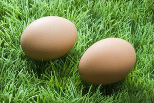 Two brown eggs on fake green plastic grass credit: Marie-Louise Avery / thePictureKitchen
