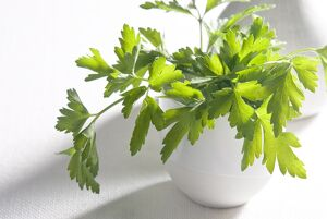 Bunch of flat parsley in small ceramic cup credit: Marie-Louise Avery / thePictureKitchen