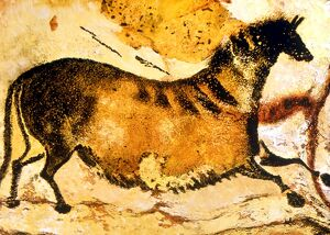 CAVE PAINTINGS AND DRAWINGS. Prehistoric cave painting of Horse from Lascaux (Axial