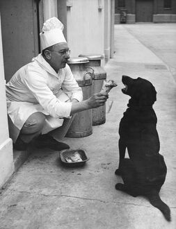 Chef Andrew Schillar gives a dog a bone from the side entrance of his kitchen. undated