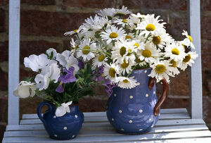 Daisies and pansies in spotted jug, on slatted blue chair. credit: Marie-Louise
