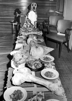 A Dog's Dinner, 19th August 1963 In honour of his first birthday, dalmation Shawclough
