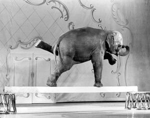 Elephant doing tricks for the camera, Tanya rehearses at the London Palladium for