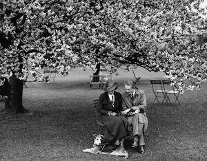 Enjoying the almond blossom in Kent - 1935 A©TopFoto
