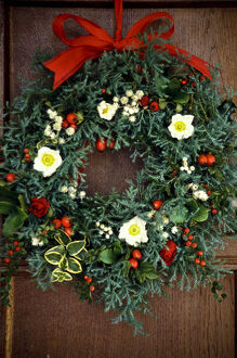 Evergreen christmas wreath with white christmas roses, rosehips, everlasting flowers