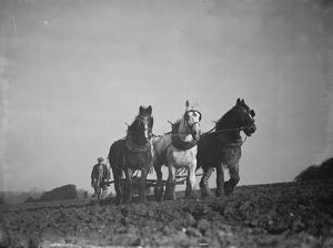 A farmer and his horse team harrowing a field in Bexley. 1938