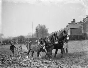 A farmer and his team of horses plough a field in Sidcup, Kent. 1936