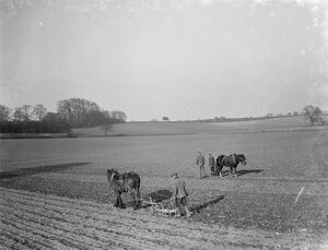 Farmers and there horses plough work together to work the field near Plum Lane