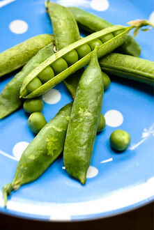 Fresh garden peas in their pods on blue spotted plate credit: Marie-Louise Avery