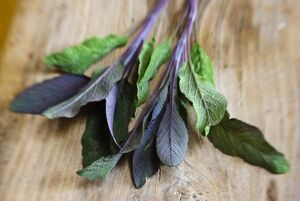 Freshly cut sprig of purple sage leaves on old wooden surface credit: Marie-Louise