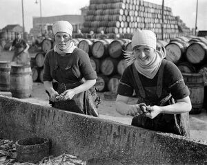 Herring Fishery at Great Yarmouth , Norfolk , England . Fisher girls gutting the herring