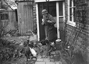 Miss Nancy Rutherford outside the house feeding her 15+ cats. 1934