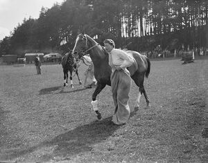 Mounted sack race in Hayward ' s Heath Gymkhana. Musical chairs, balloon bursting