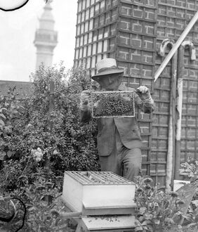 Mr C Keene his face masked with a frame of his bees in the garden on the roof of