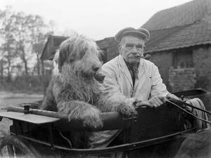 Mr Groombridge and his sheepdog, smoking their pipes, aboard their pony trap. 1936