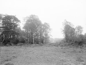 New Forest. 1925