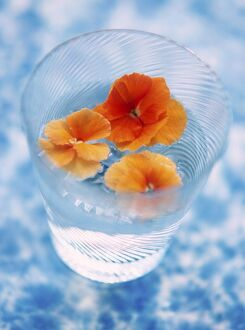 Orange coloured pansy heads floating in water in fine glass tumbler on mottled bue
