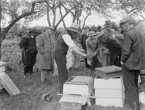 A Parson beekeeper showing off his hives . 1935