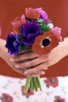Posy of red, pink and mauve anemones held in hands credit: Marie-Louise Avery /