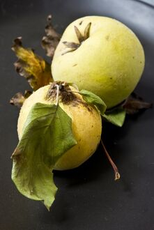 Two quinces on black plate. credit: Marie-Louise Avery / thePictureKitchen / TopFoto