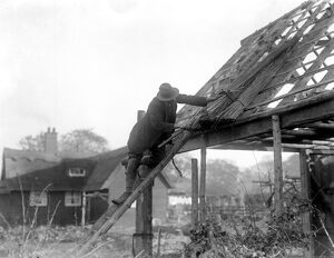 Reed Thatching in Norfolk. Mr R. W. Farman, of North Walsham, The last working