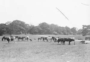 Scenes in the New Forest. 1925