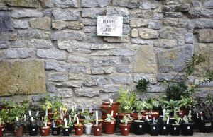 Selection of plants for sale in garden in front of old stone wall credit: Marie-Louise