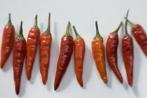 Small hot bird's eye chilli peppers arranged on white surface. credit: Marie-Louise
