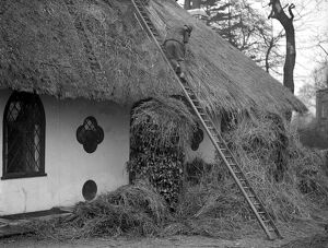Thatching the roof of the ' Hermitage ' headquarters of the Selboorne Society