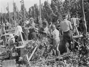 Women hop pickers in Beltring, Kent. Each worker has a gas mask over their shoulder